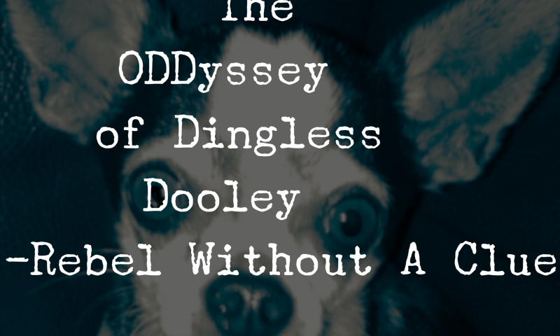 The ODDyssey of Dingless Dooley